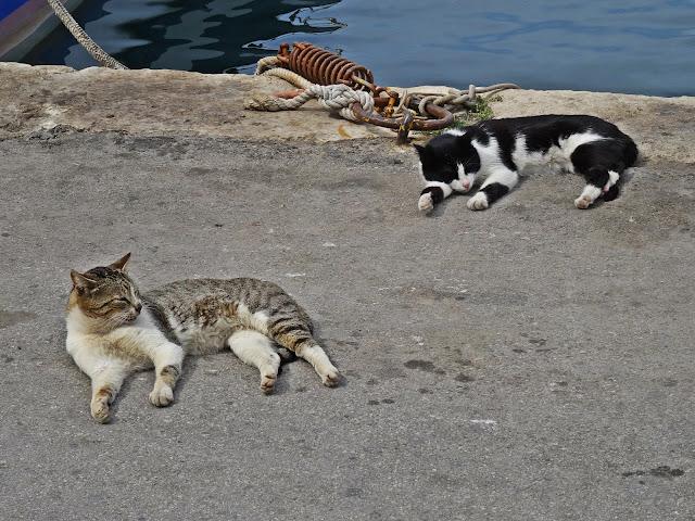 koty na Krecie w porcie