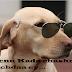 कुत्ते पर हास्य निबंध Funny Essay on Dog