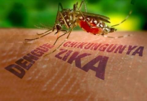 33 casos de dengue foram confirmados em Milagres,72 casos foram notificados e 55 casos prováveis