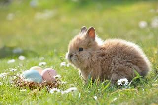 Cara Ternak Kelinci yang Baik dan Benar untuk Pemula