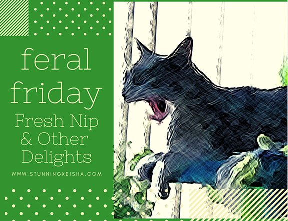 Feral Friday: Fresh Nip & Other Delights