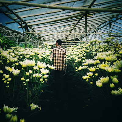 kebun bunga bandungan