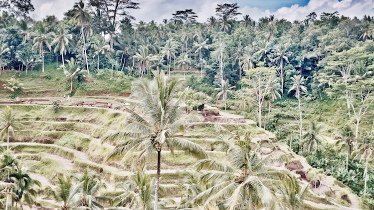 Ubud atrakcje, Ubud na Bali, małpi las w Ubud, Bali co zobaczyć, Bali Indonezja, Ubud restauracja, Ubud bali wycieczka, Ubud pola ryżowe, Ubud pałac, Ubud małpy, Bali co zobaczyć,