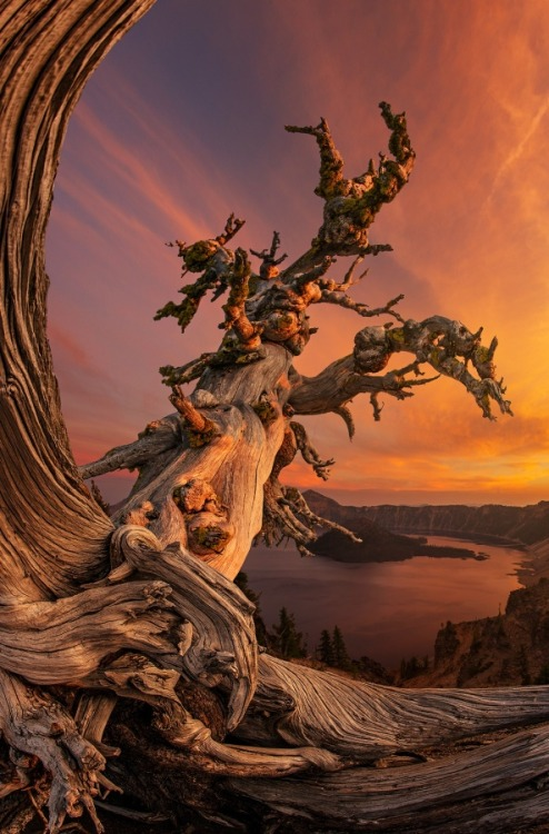 Crater Lake Ambassador