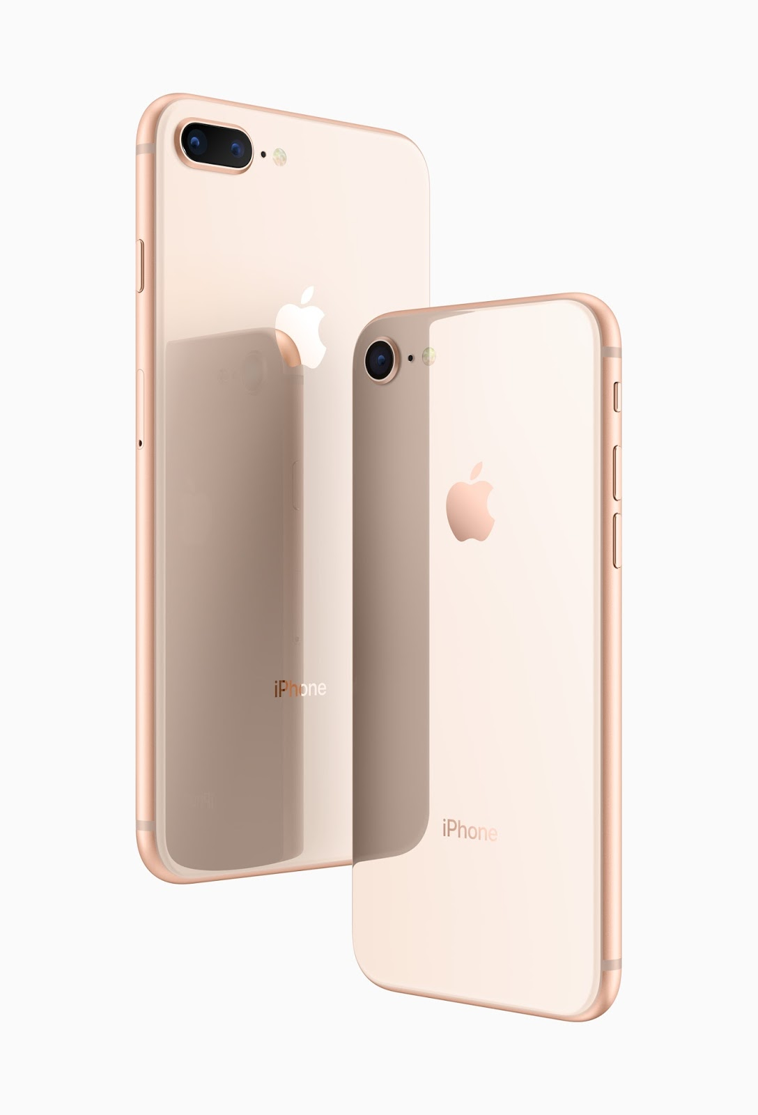iPhone 8 and Plus back