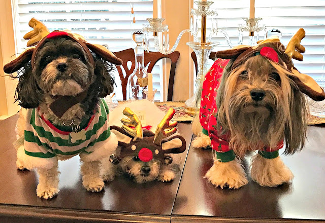dogs in holiday wear