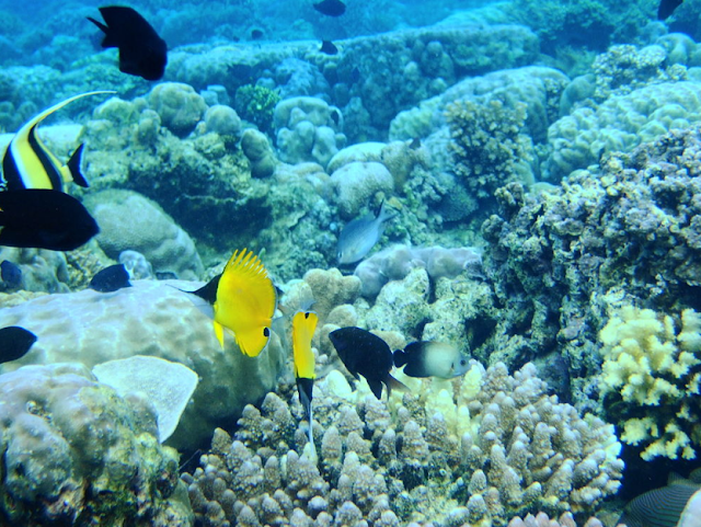Bunaken Island Diving