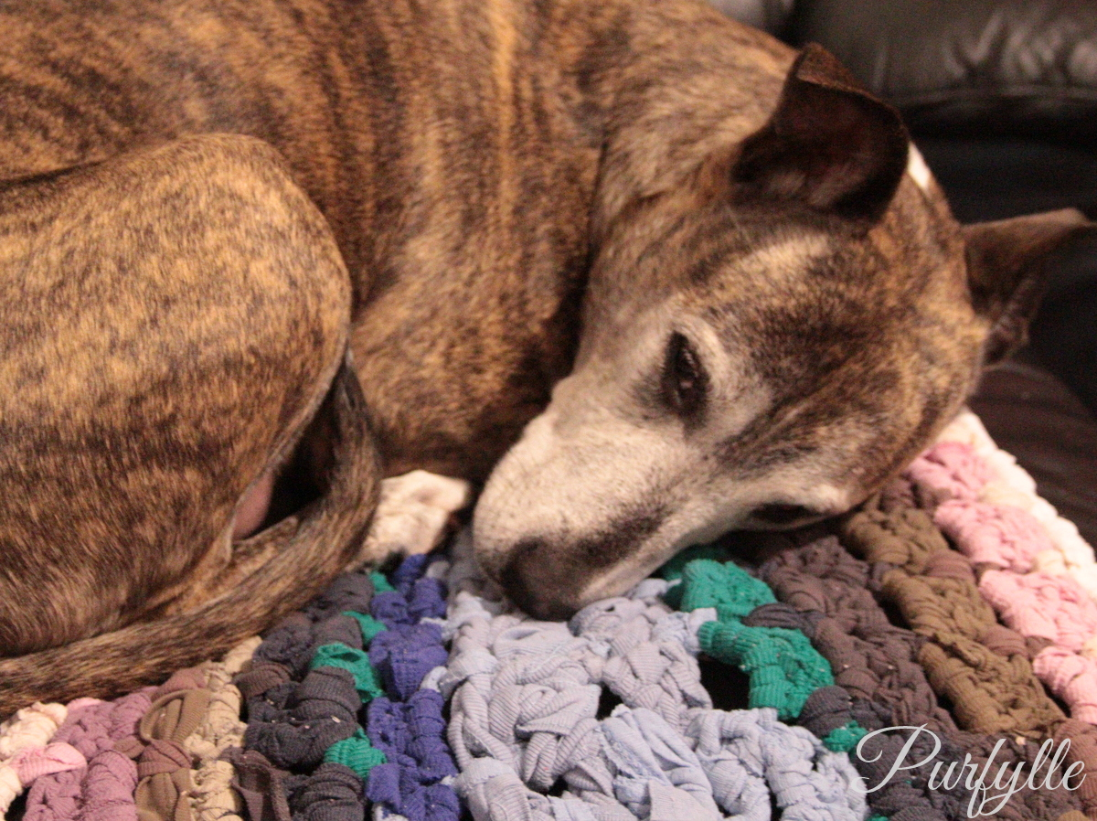 Crochet Pet Rug from Old T-Shirts
