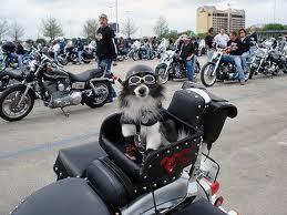 fotos de motos - imagem de motos