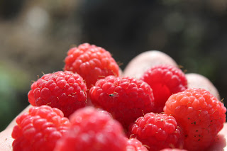 6 alimentos termogênicos para acelerar o seu organismo