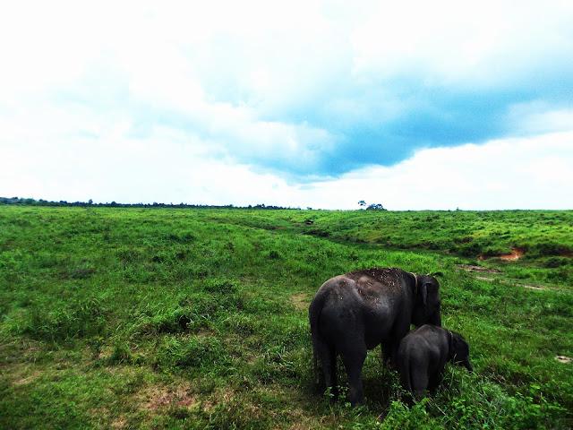 Berlibur di Lampung? Coba Nikmati Aktivitas Gajah di Way Kambas