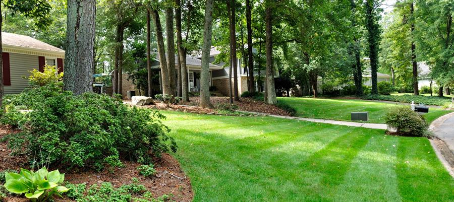 Getting a beautiful lawn