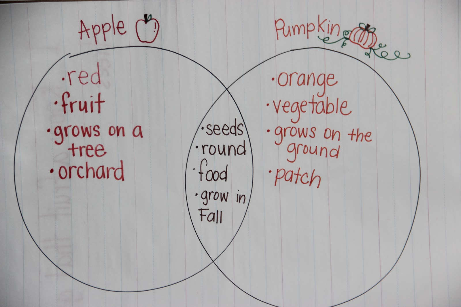 Pumpkin Diagram Worksheet