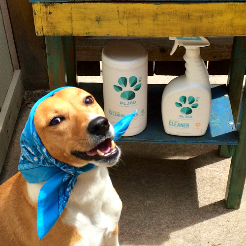 Dog Smell Clean Up: Rubicon Days: Pet-Friendly Spring Cleaning Giveaway With PL360