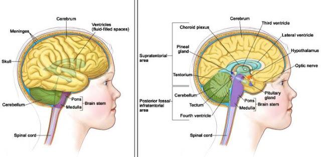 recognizing-early symptoms-brain tumors