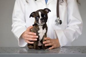 Kebebasan untuk Memilih Dokter Hewan Anda