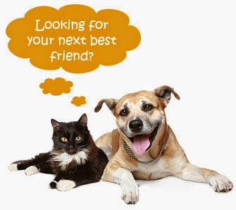 Image result for cat and dog adoption pics