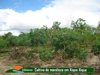 NOSSA HISTÓRIA - A Agricultura