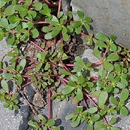 ► Se você notar uma planta em seu quintal, não se apresse para arrancá-la pelas raízes!