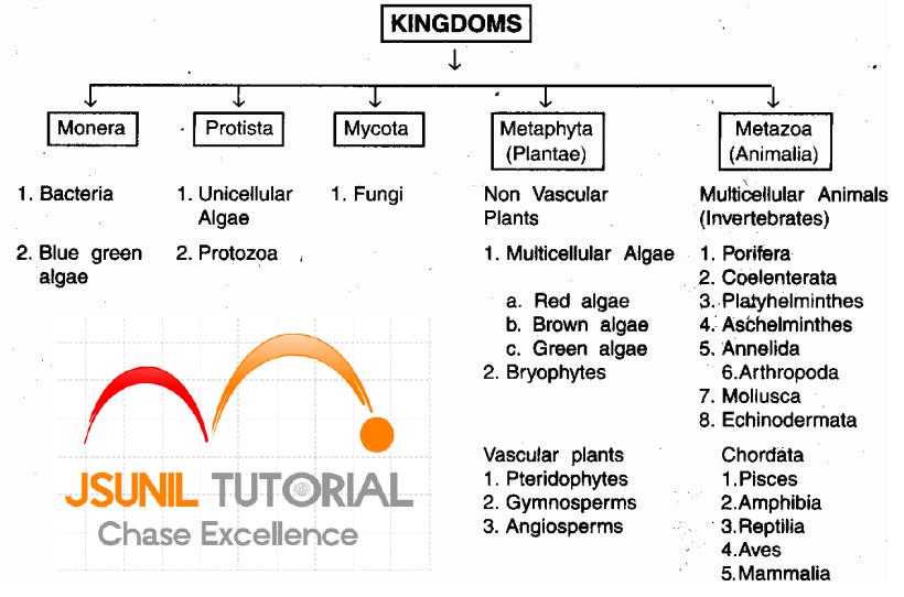 CBSE Pathshala: Diversity in Living Organisms class 9 ...