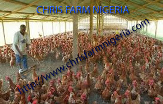 Bankable Business plans/feasibility study on Poultry business