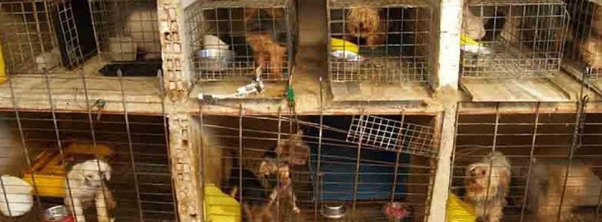 perros en su casa