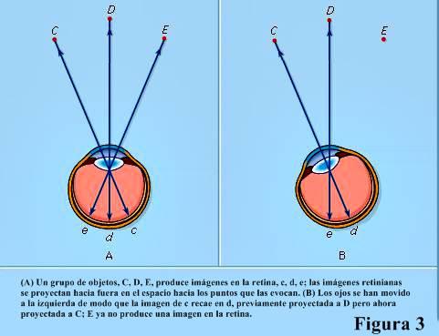 Figura 3: Proyección de imágenes retinianas en el espacio.