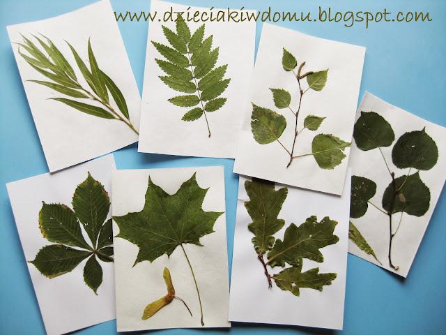 zielnik z liśćmi drzew, jak rozpoznać drzewo po jego liściu - kreatywne zabawy