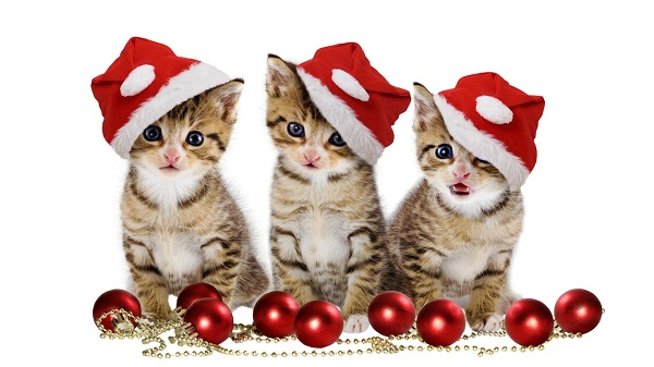 Download Christmas Kittens with Santa Hat Wallpaper