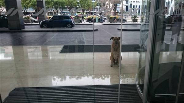 Chú chó hoang lặng lẽ chờ đợi