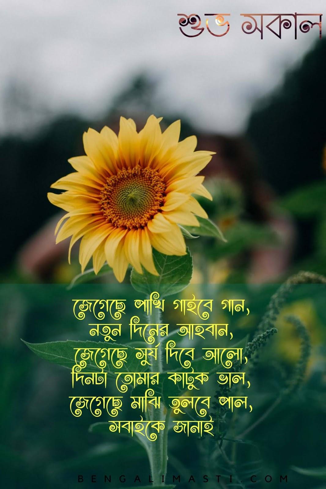 subho Sokal image