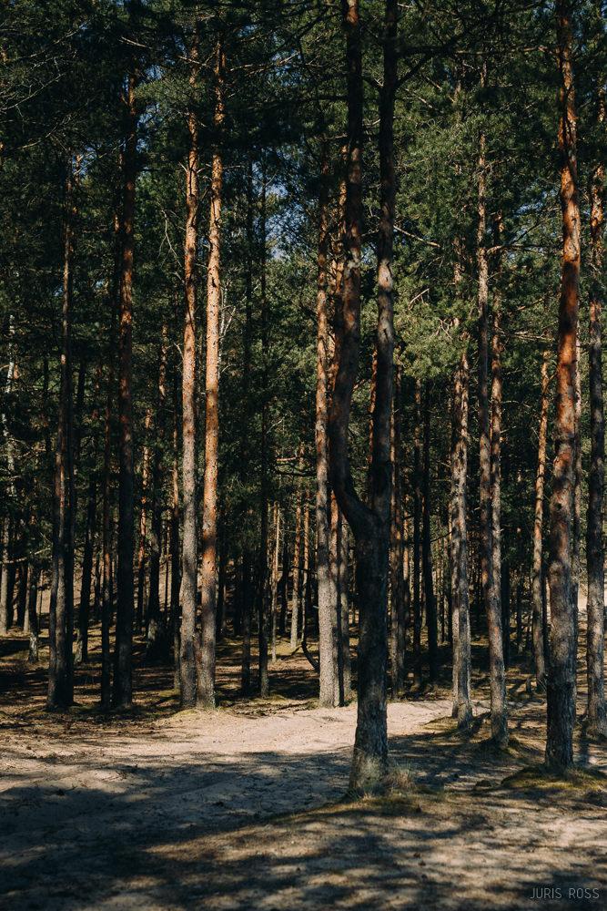 skaists mežs pie Rīgas