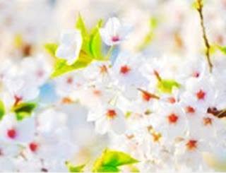 Arti Mimpi Memegang Bunga Anggrek