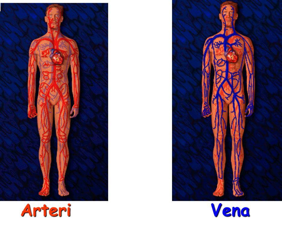 Nota Pendidikan Jasmani: PJM3106 Anatomi dan Fisiologi ...
