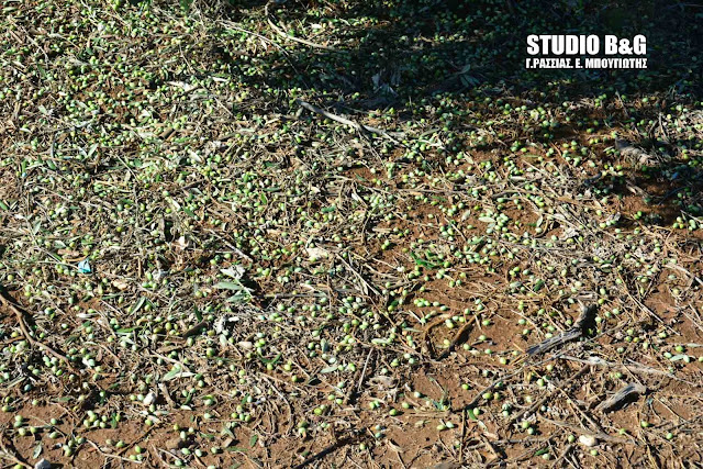 Σε ελιές και εσπεριδοειδή οι ζημιές από το χαλάζι στην Αργολίδα