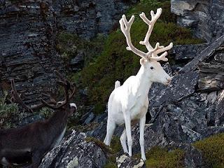 albino-hayvanlar