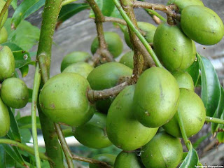 Ambarella fruit images wallpaper