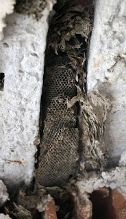 A bees nest in the wall