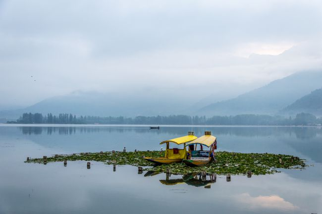 Iconic Shikaras at Dal Lake Srinagar