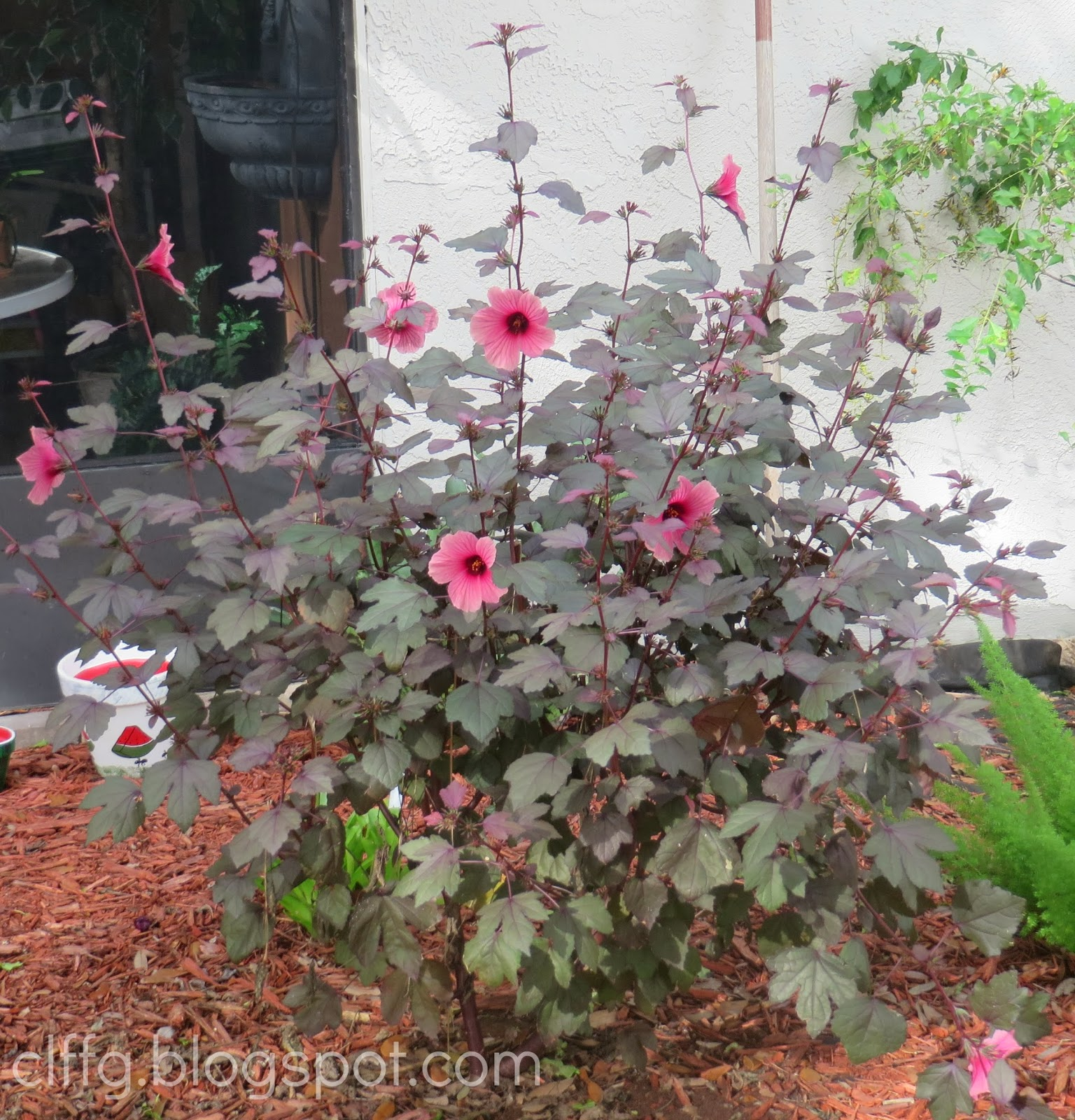 Maple Leaf Hibiscus: CLFFG/ Tami's Virtual Assistance Corner: December 2013