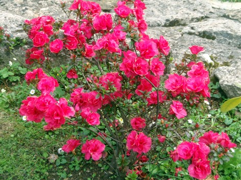 Color en el jard n todo el a o plantas que florecen en enero - Plantas exterior todo el ano ...