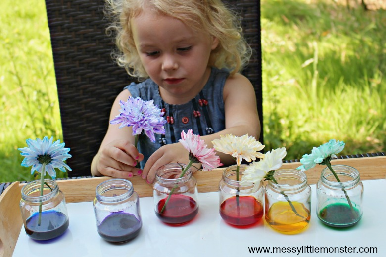 cool science experiment for kids - colour changing flowers