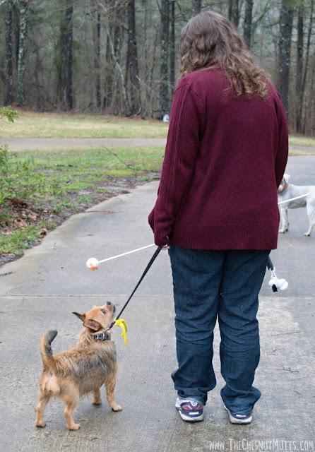 Jada walking on the leash