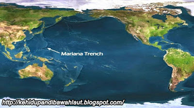 http://kehidupandibawahlaut.blogspot.com