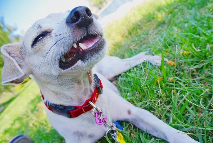 Natural Balance Dog Food Rolls Calories