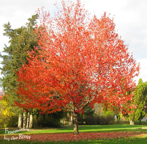 red leaves on tree