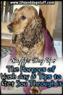 The Horrors of Dog Wash Day - 9 Tips to Get You Through It