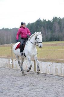Katarina Allbrecht, Riitta reissaa, working equitation