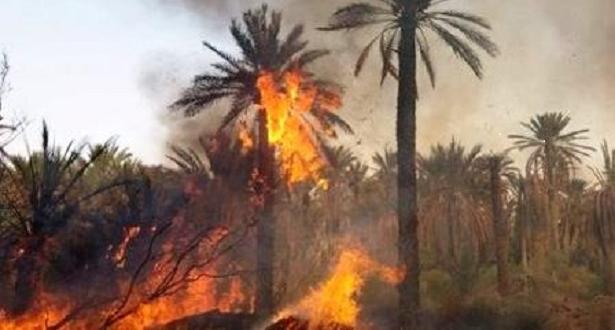 حريق يأتي على نحو 100 نخلة بواحة تيغمرت بكلميم