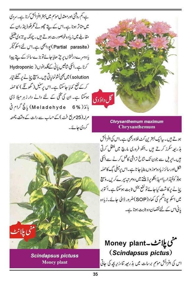 How to grow outdoor indoor plants flowers urdu guide for Gardening meaning in urdu